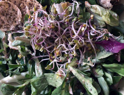Deboras Wellness Back to Basic Superfood Salad